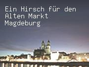 Ein Hirsch für den Alten Markt Magdeburg
