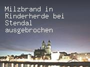 Milzbrand in Rinderherde bei Stendal ausgebrochen